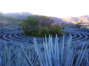 Fábrica de tequila